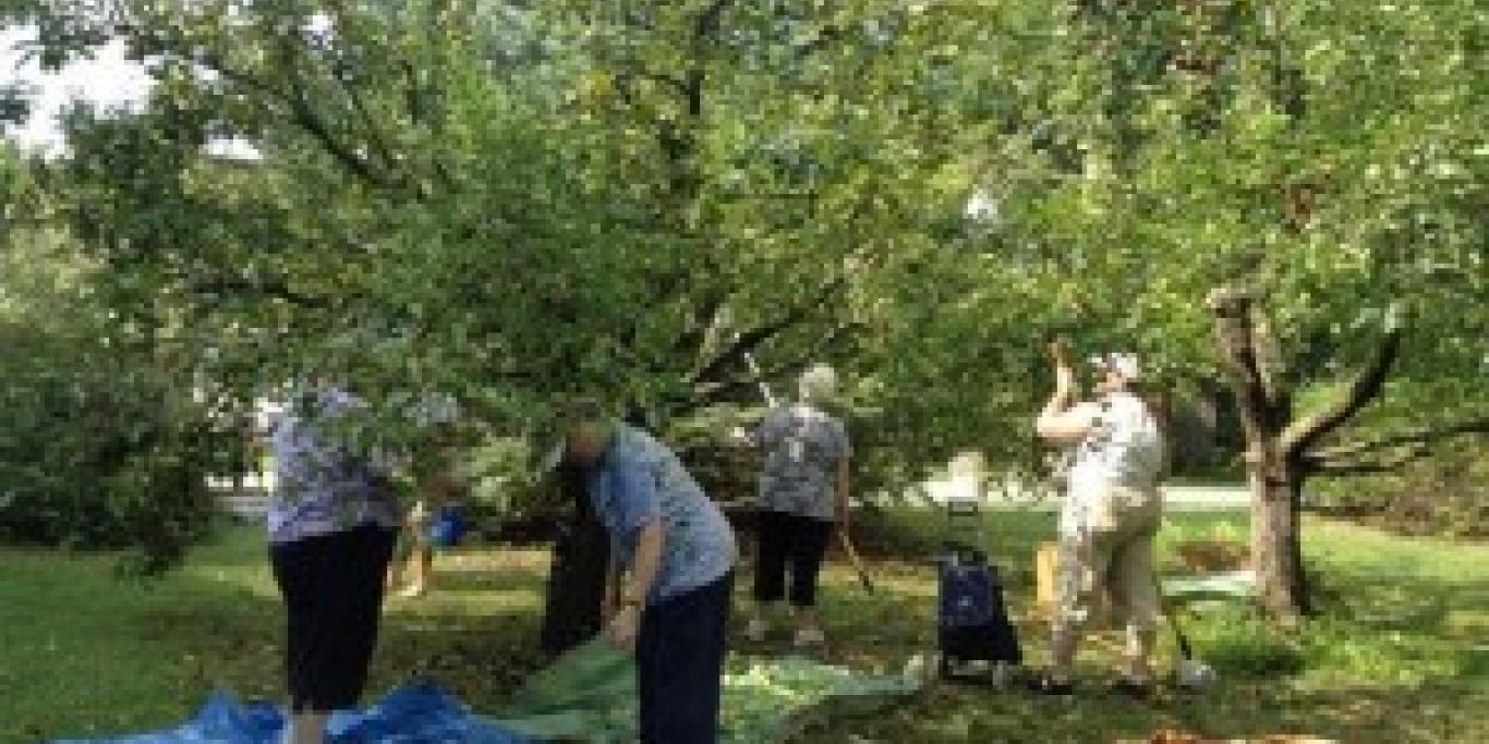 gleaners picking apples 2
