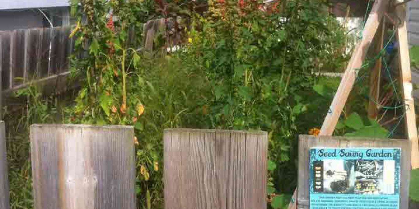 backyard seed saving